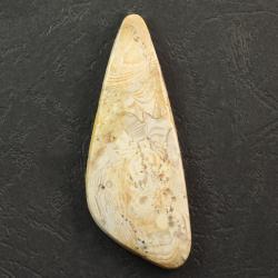 Кабошон из окаменелостей